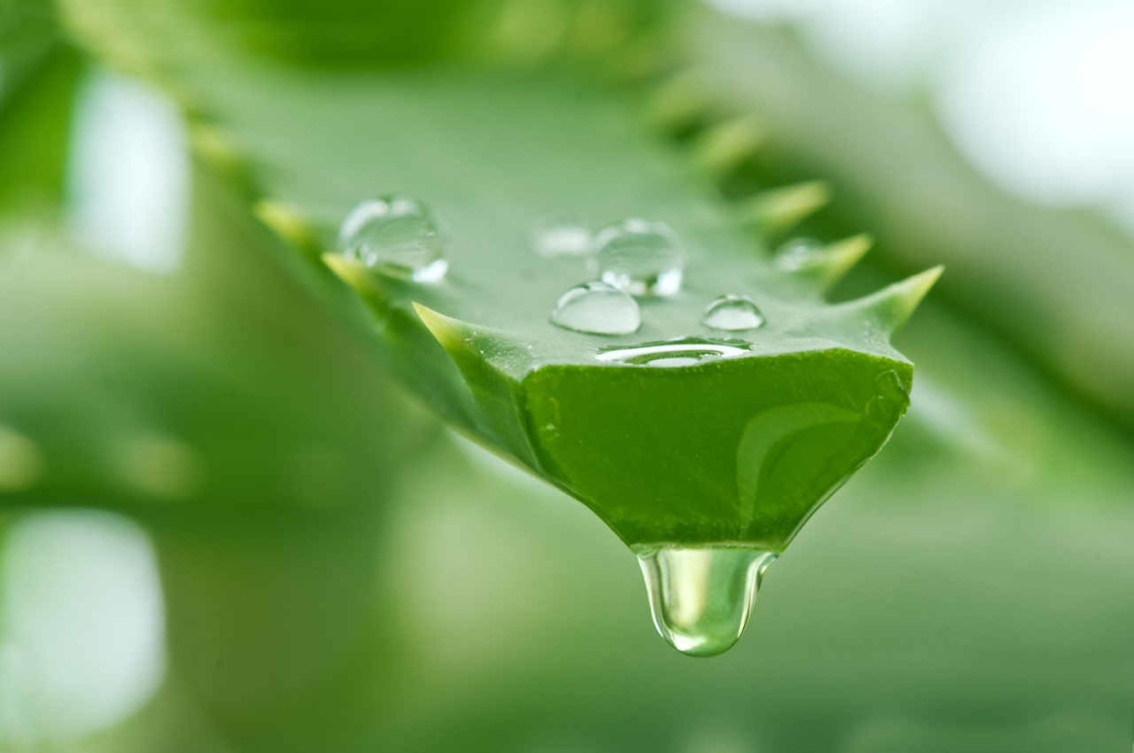 Aloe vera juice - How to get rid of heartburn
