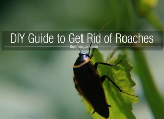 DIY Guide To Get Rid Of Roaches