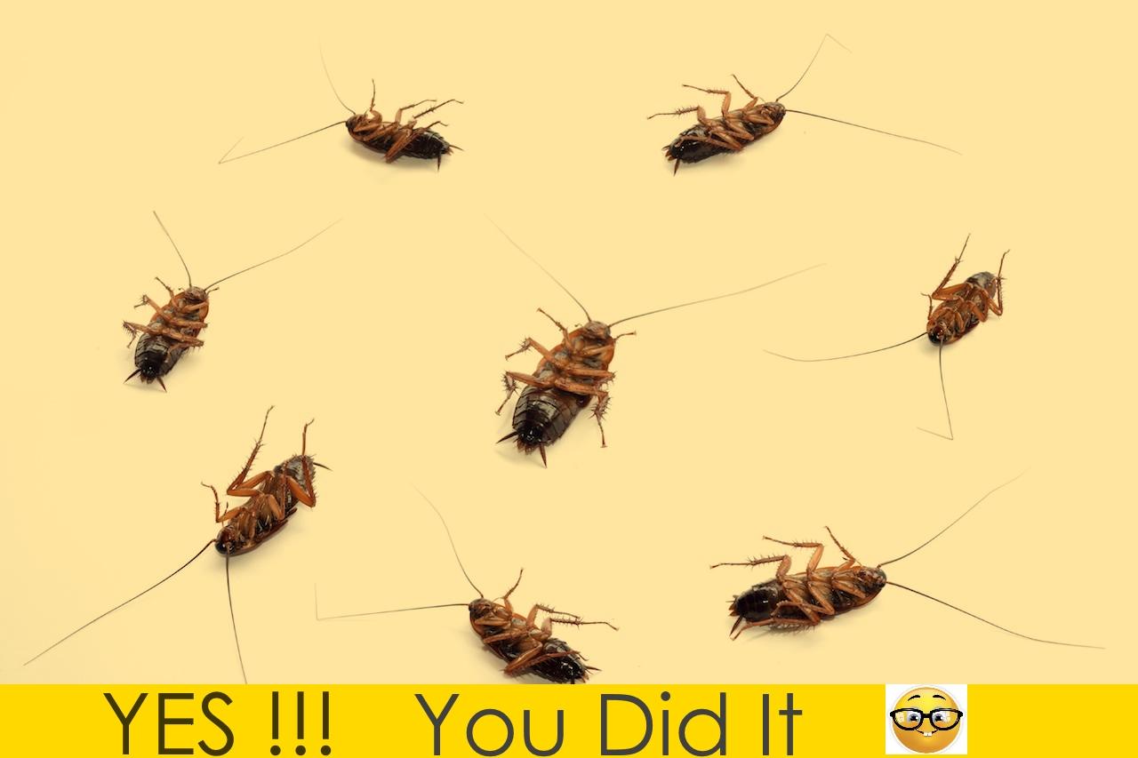 best cockroach killer