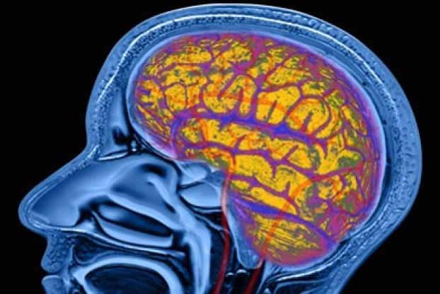 does alcohol kill brain cells