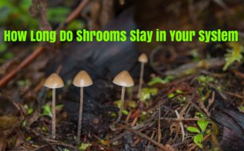 How Long Do Shrooms Stay in Your System