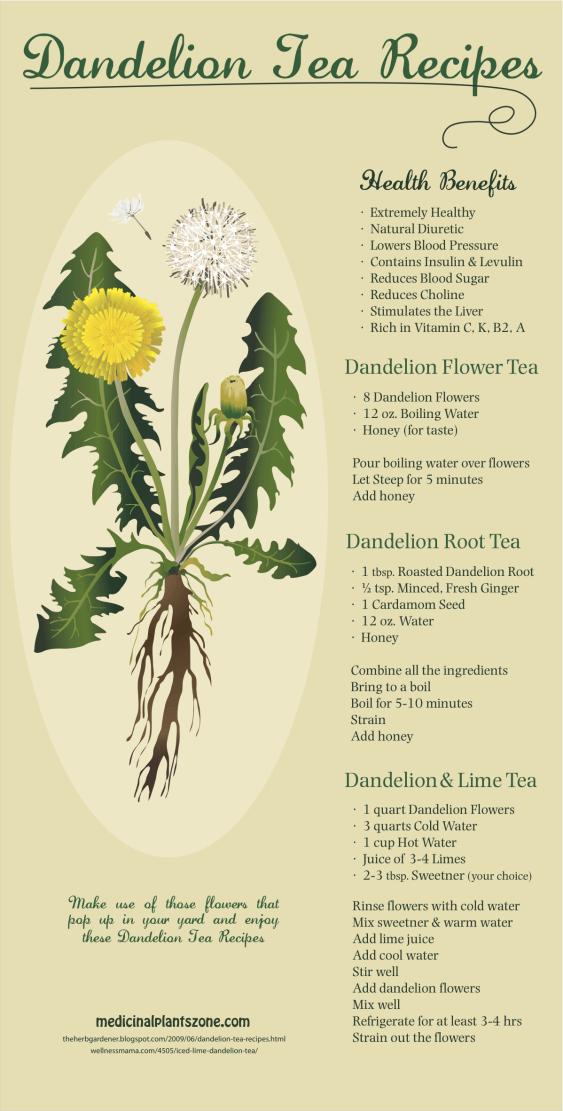 recipes for dandelion tea
